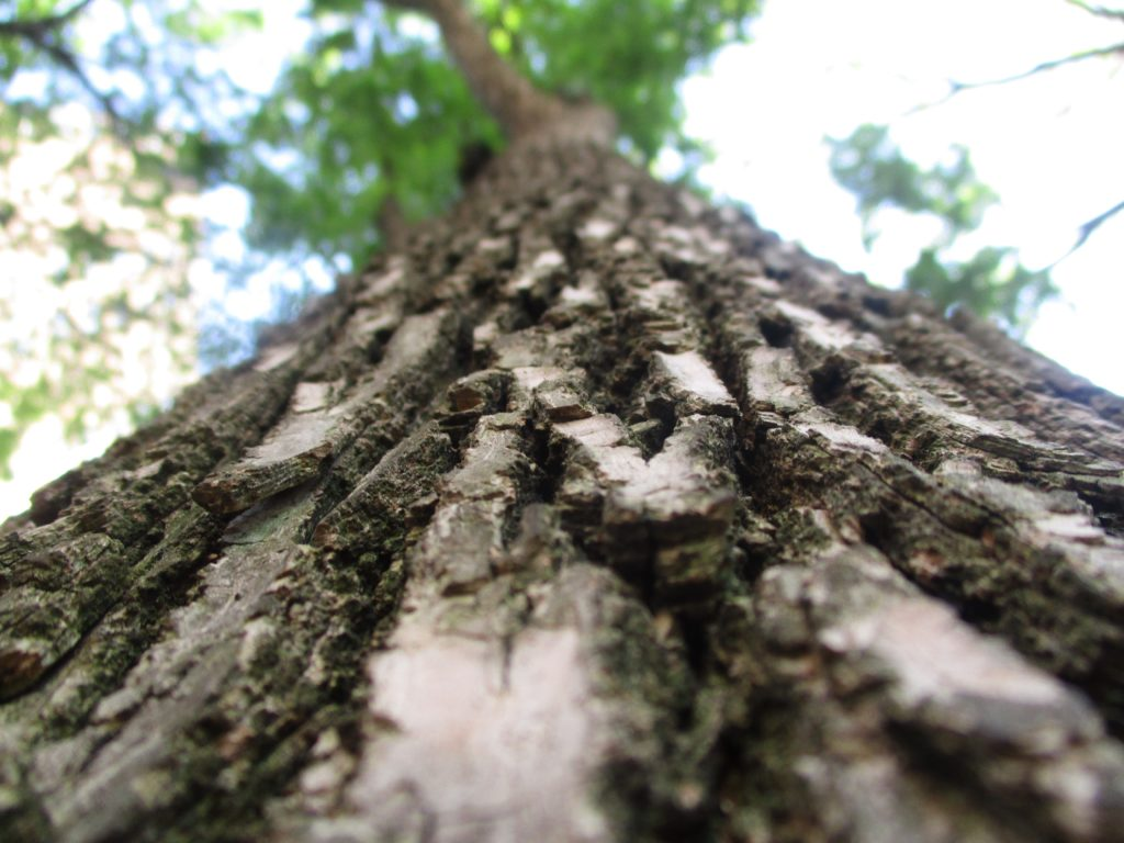 Taken by Hailey, Age 12: The Bark Of A Tree