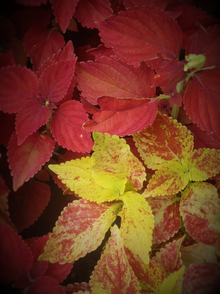 Taken by Redat, Age 15: Holiday Leaves