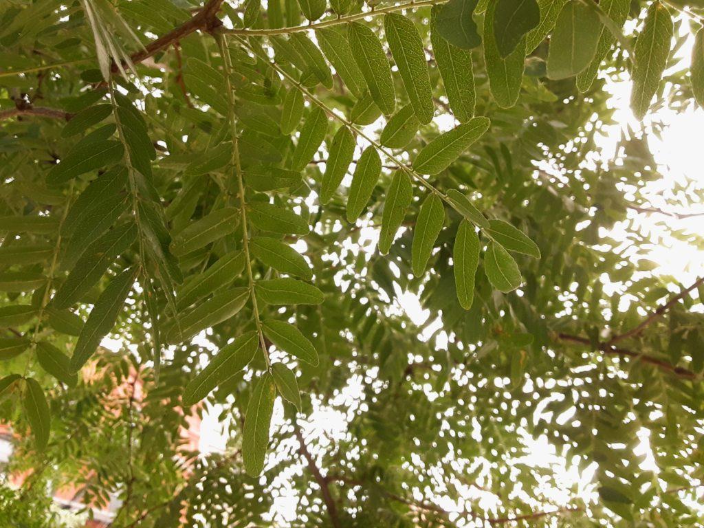 """Leaves"" by Shi-En"