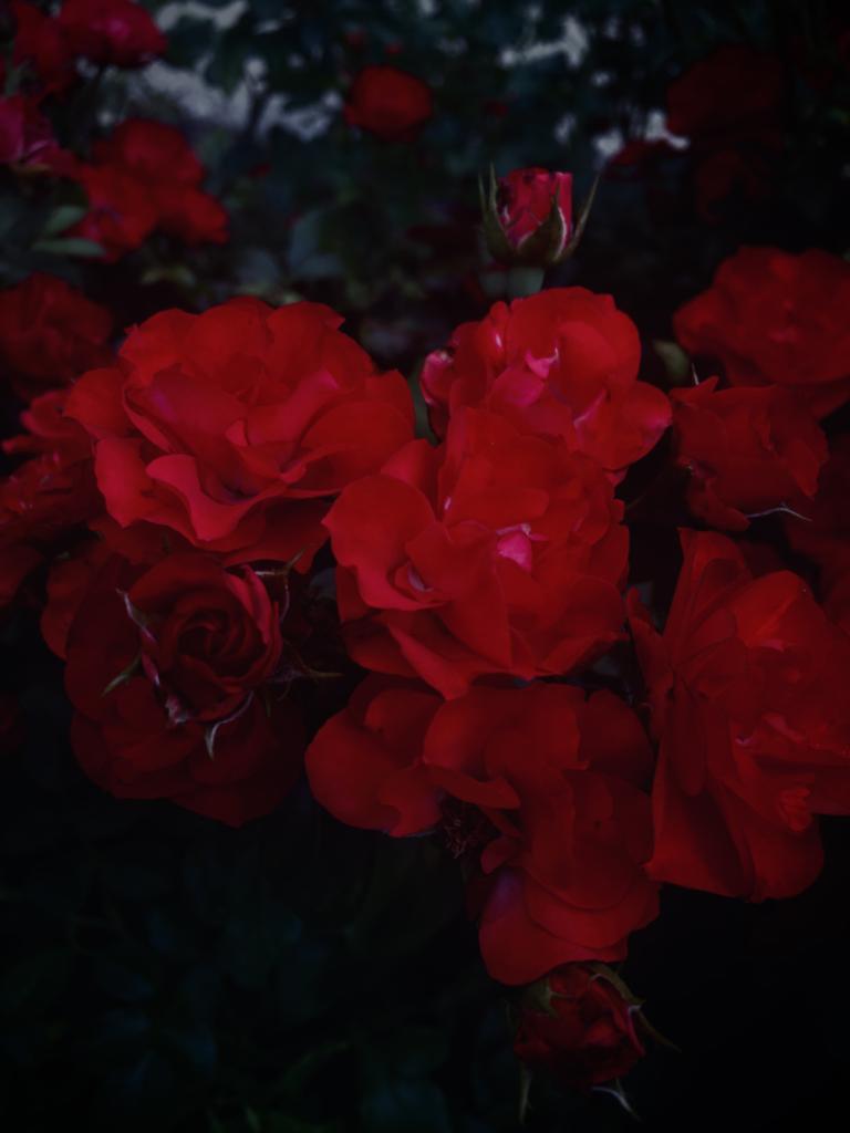 """""""Blooming Flowers"""" by Elizabeth"""